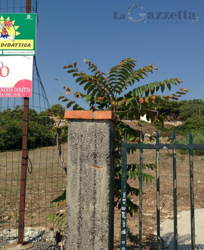 Terreno per parcheggio al Faro Santa Croce