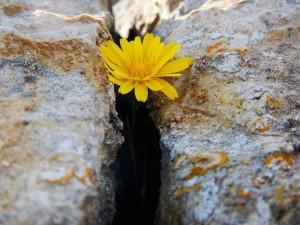 blog-le-ali-di-icaro-il-terremoto-prigionieri-o-liberi