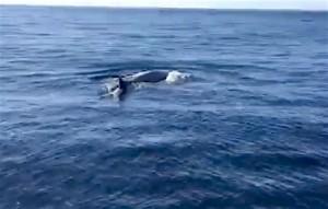 avvistamento-balene-augusta-2