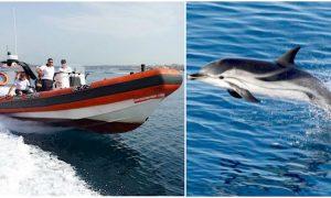 guardia-costiera-stenella-salvataggio-cetacei