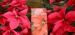 Le stelle di Natale Ail in piazza Duomo, per sconfiggere le leucemie