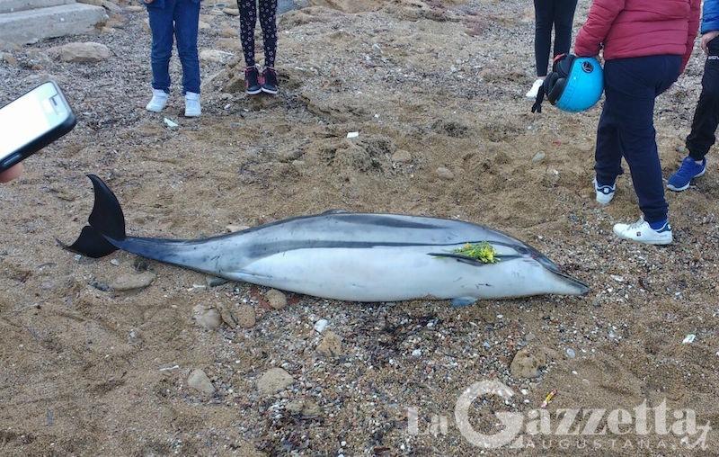 delfino-spiaggetta-delle-grazie-augusta-2